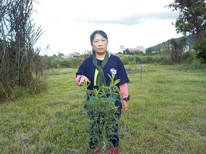 種植者賴友梅